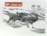 Artist: GRIFFITH, Pamela | Title: Cape Barren Geese grazing | Date: 1989 | Technique: hardground-etching and aquatint, printed from one copper plate | Copyright: © Pamela Griffith