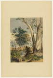 Artist: ANGAS, George French | Title: Old gum tree on the Gawler. | Date: 1846-47 | Technique: lithograph, printed in colour, from multiple stones; varnish highlights by brush
