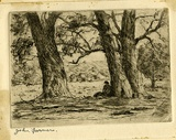 Artist: FARMER, John | Title: Old gums. | Date: 1950 | Technique: etching, printed in black/brown ink with plate-tone, from one  plate